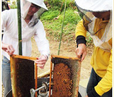 竹崎養蜂場