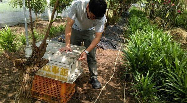 斗六棗子園 第一次放蜂