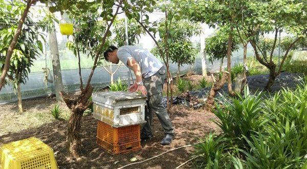 養蜂日記x田間放蜂-每次去都有酒喝的棗子園