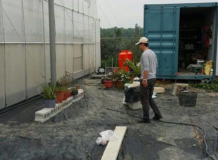養蜂日記x田間放蜂-咫尺天涯的番茄溫室