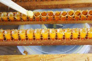 蜂王乳照片1