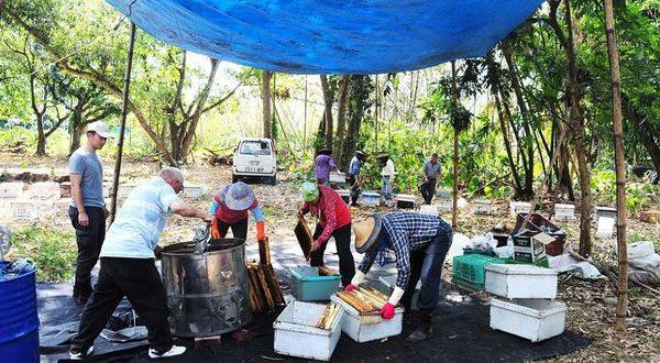 嘉義竹崎養蜂場採收蜂蜜