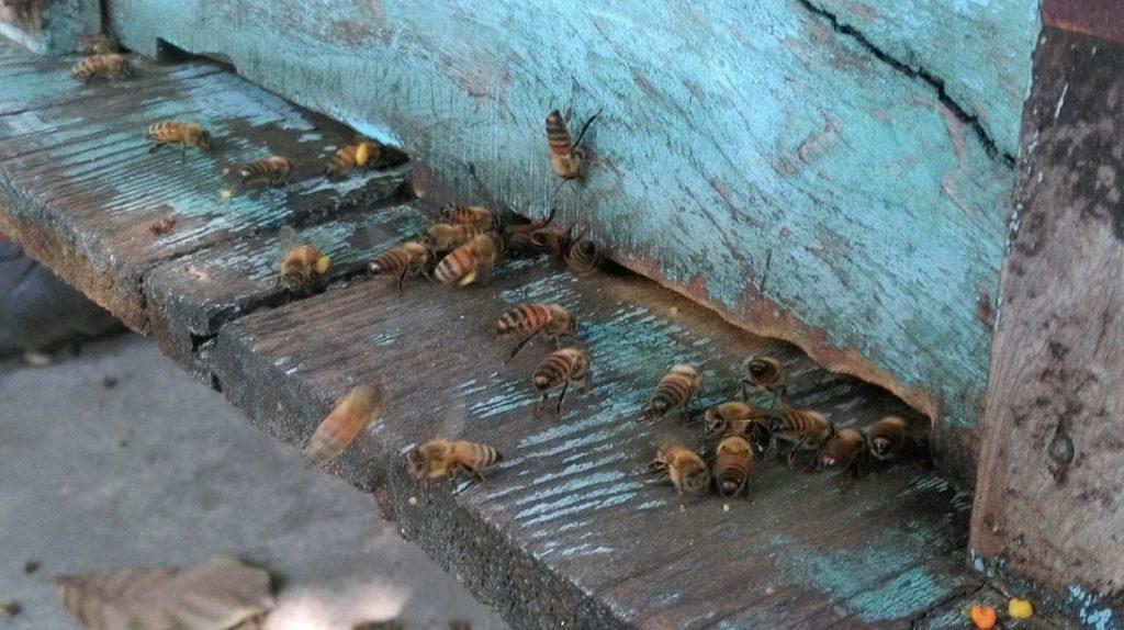 養蜂日記-紅斗笠-蜂箱