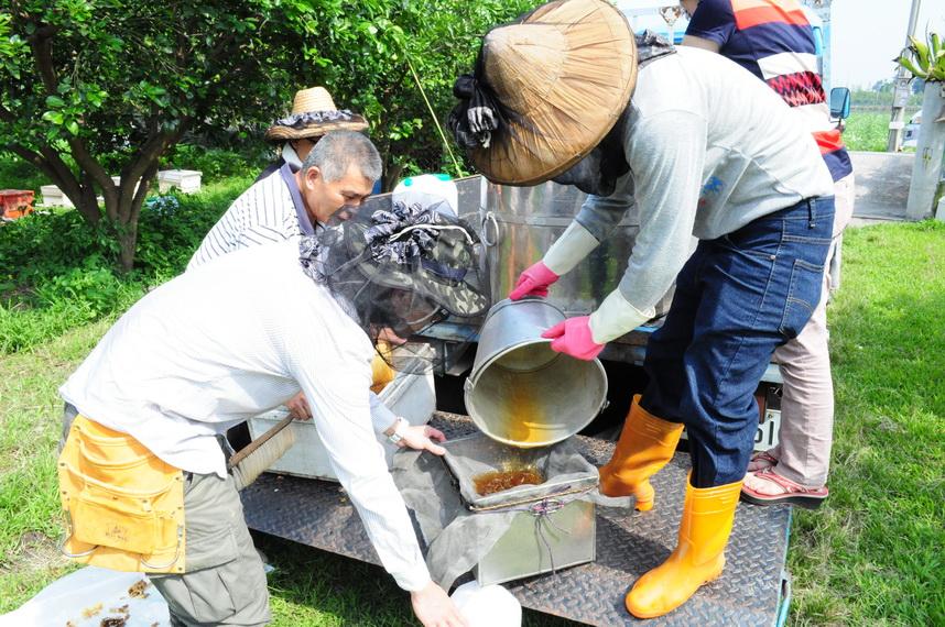 放蜂計畫-採收蜂蜜