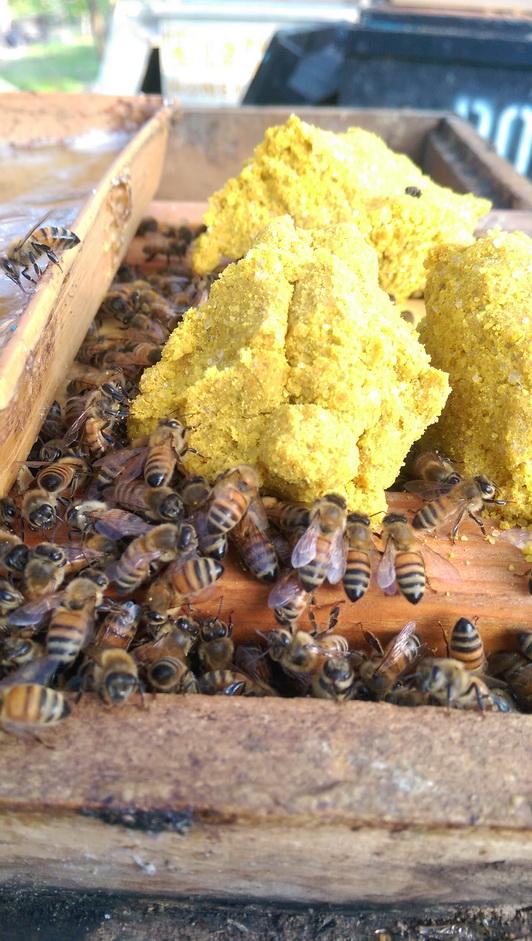 田間放蜂計畫-餵食