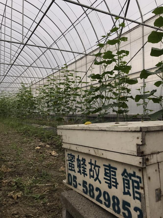 田間放蜂計畫-溫網室