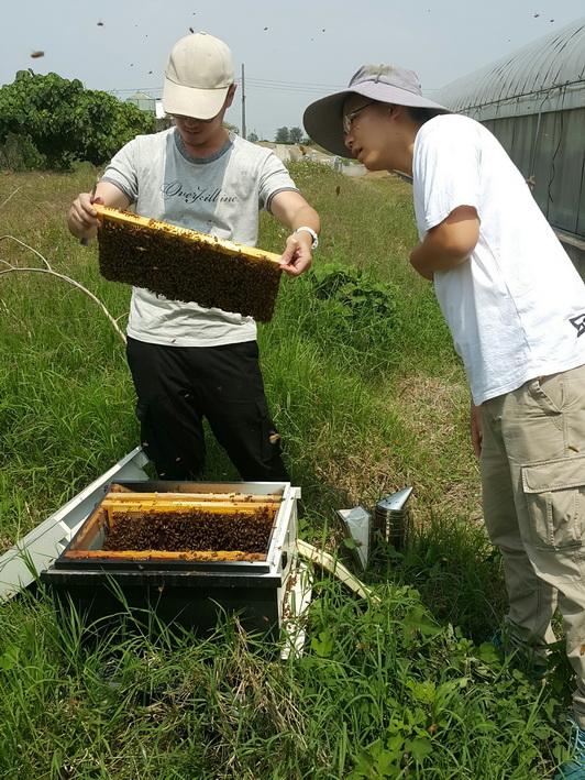 養蜂日記-呂先生
