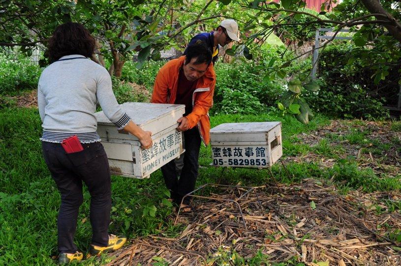 養蜂日記x田間放蜂-鍾老師的第二年