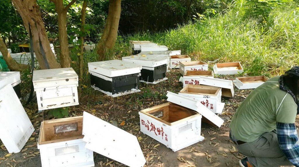 田間放蜂蜂箱