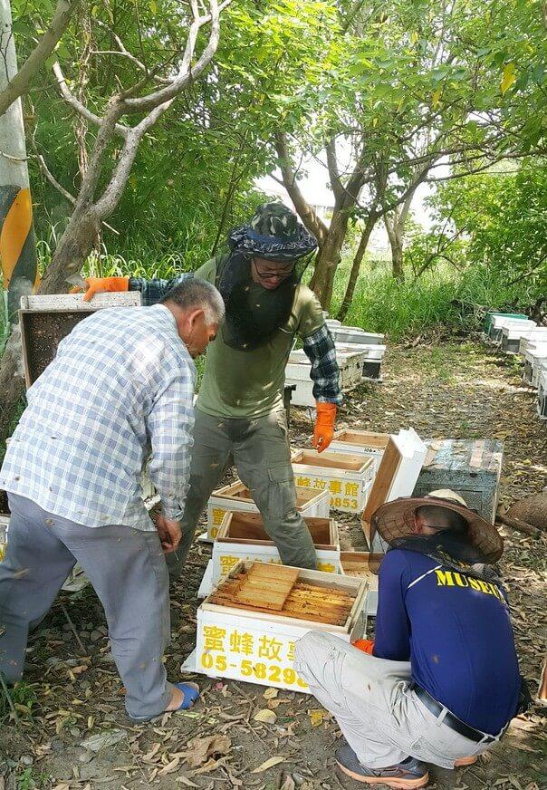養蜂人移箱作業