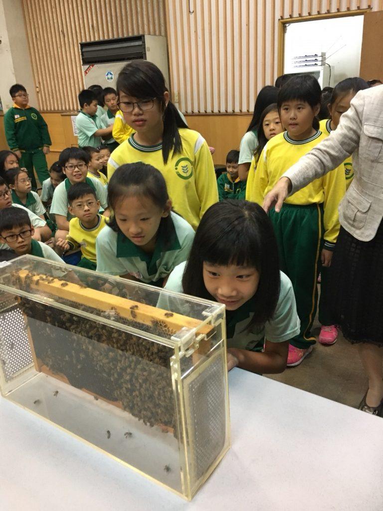 蜜蜂與小朋友