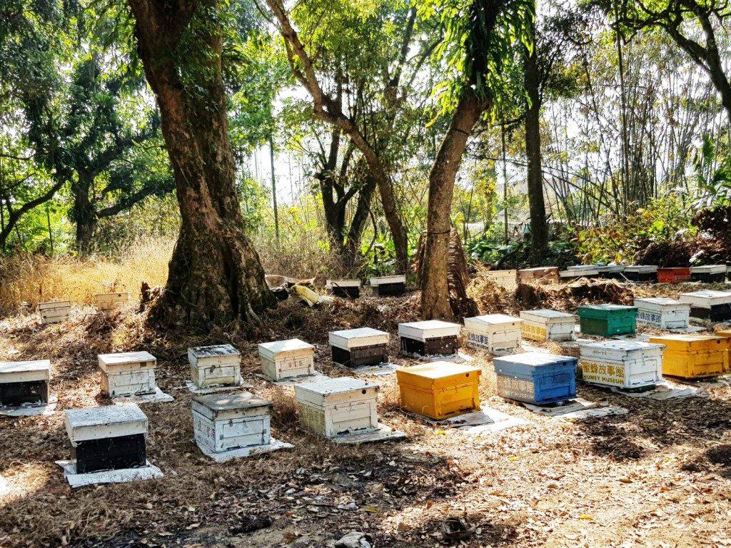 蜜蜂故事館嘉義竹崎養蜂場