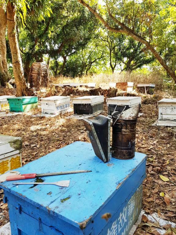 蜜蜂故事館的養蜂場