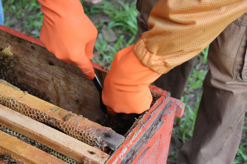 我也會照顧蜜蜂講座 整理蜂箱
