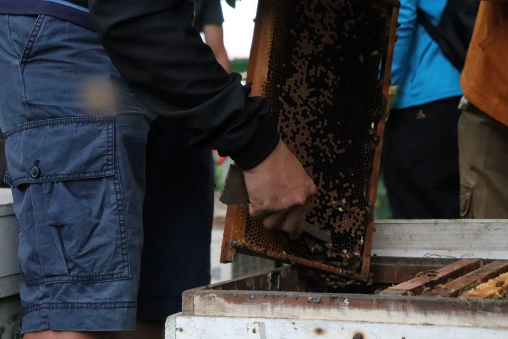 我也會照顧蜜蜂講座 整理巢片