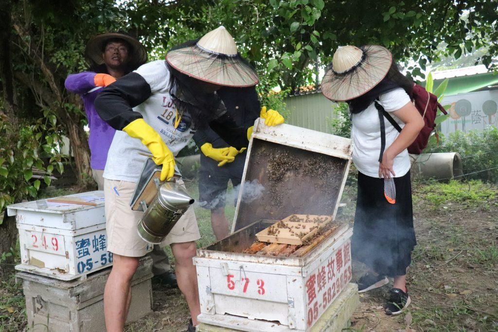 我也會照顧蜜蜂講座 開蜂箱