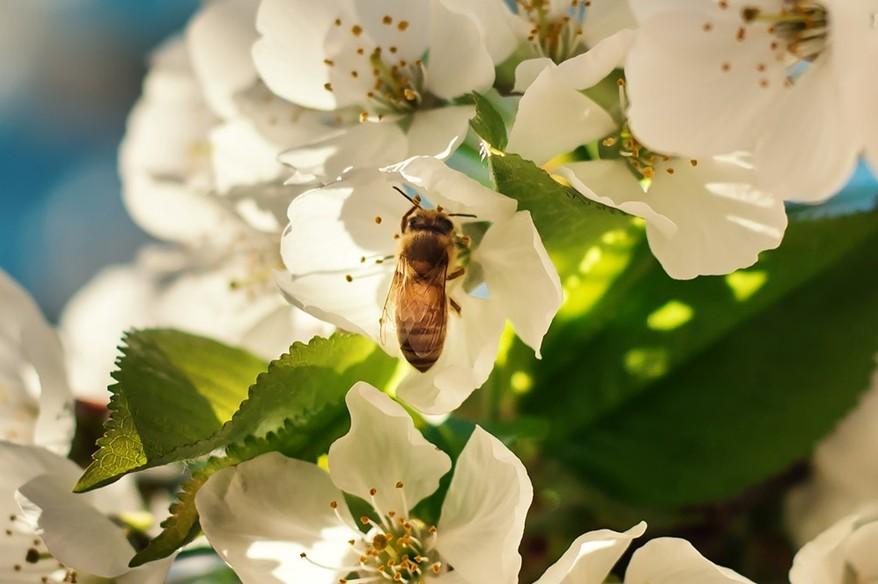 泰國,養蜂