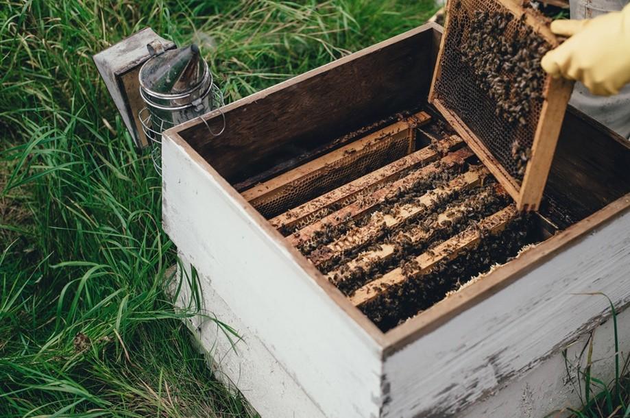 蜂箱與燻煙器