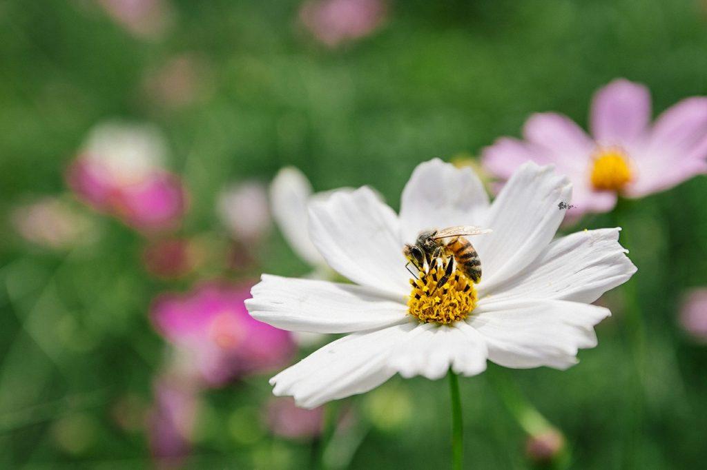 蜜蜂故事館純天然無農藥花粉