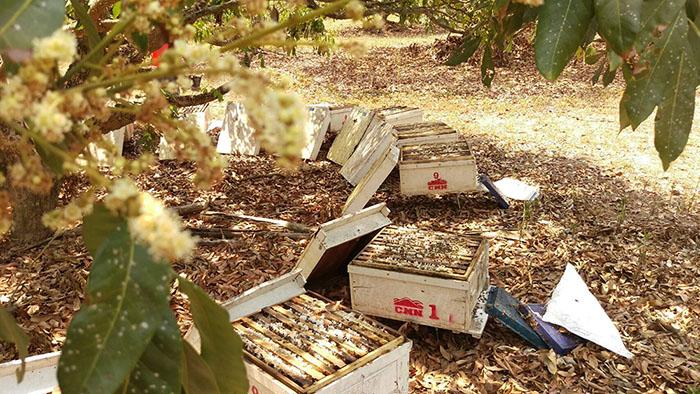 泰國蜂蜜好嗎